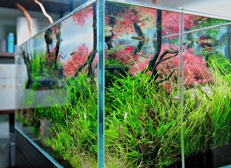 Aquarium Neo Diffusor