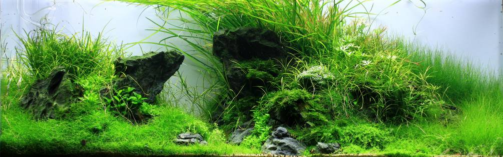 Aquascaping Produkte kaufen : AQUASABI Online Shop