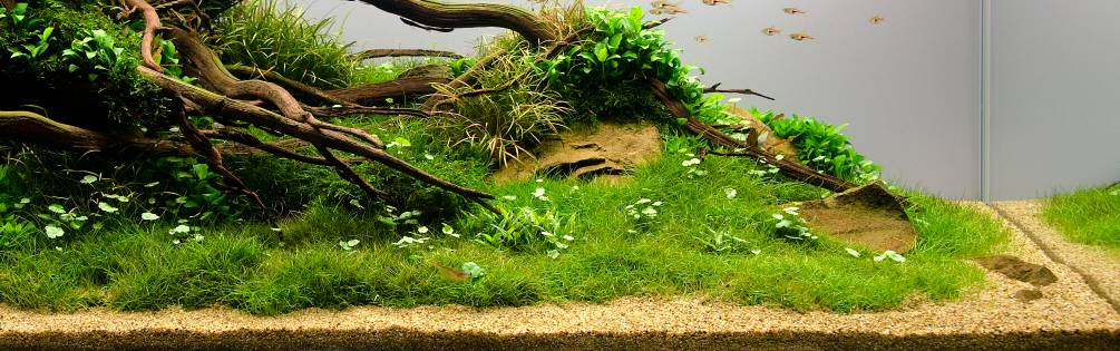 Sand Und Soil Aquascaping Wiki Aquasabi