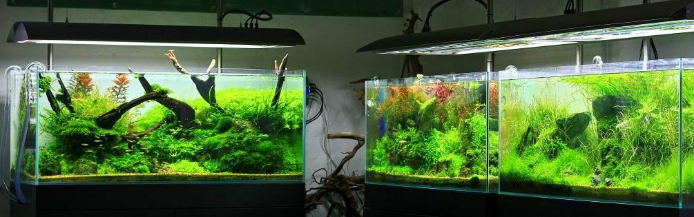 aquarium g nstig kaufen aquasabi online shop. Black Bedroom Furniture Sets. Home Design Ideas