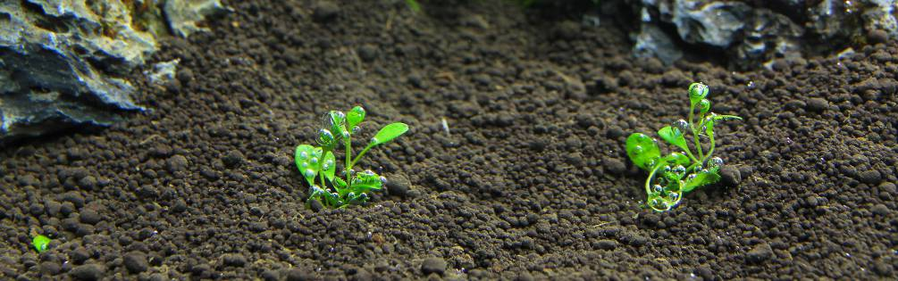 Soilboden