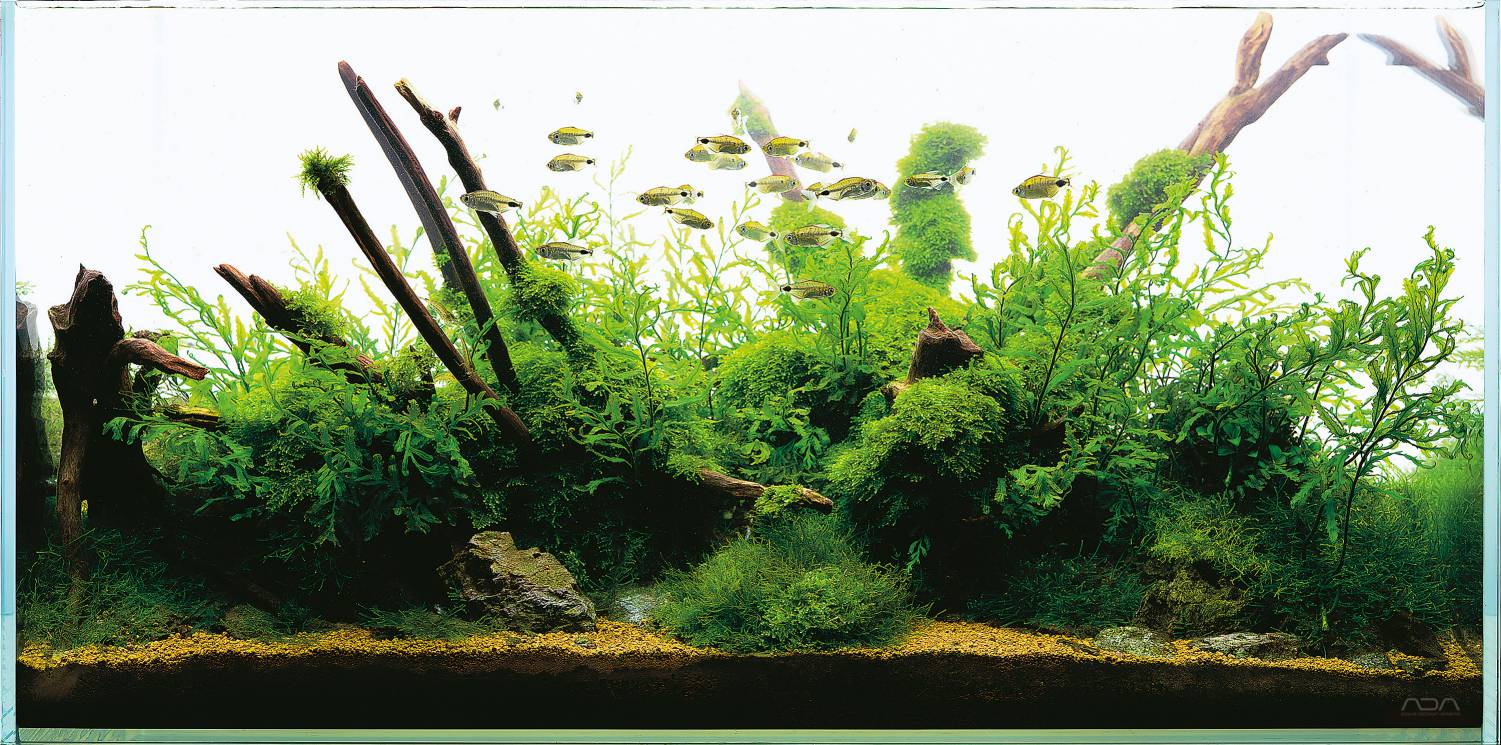 Naturaquarium und Aquascaping - Aquascaping Wiki