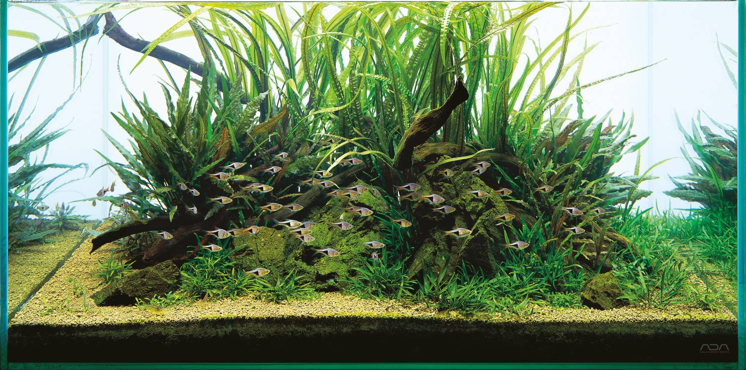 ADA Aqua Soil Malaya and Africana - A piece of nature for your aquarium