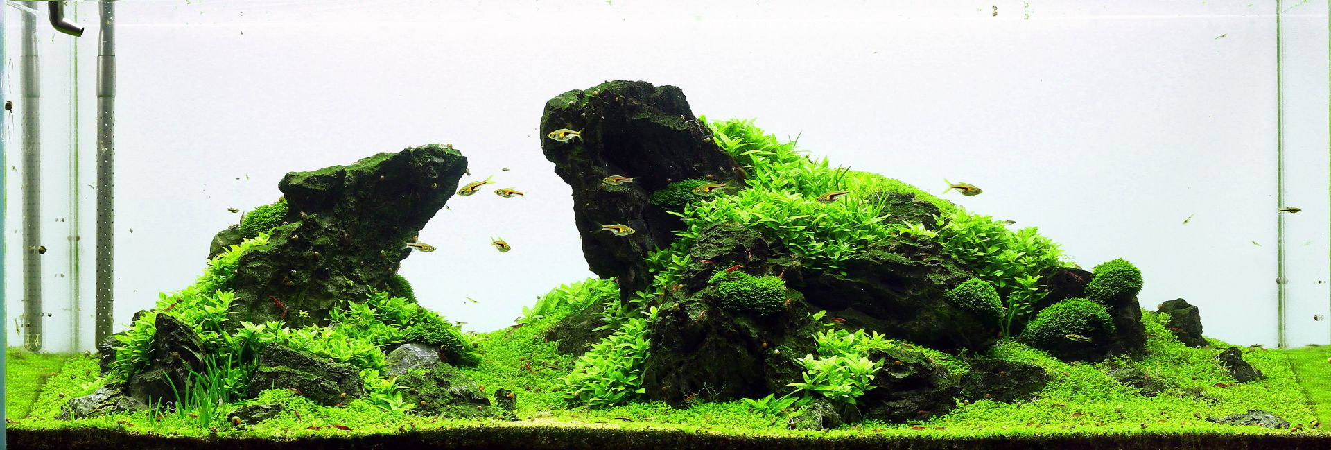 Iwagumi Aquascaping Wiki Aquasabi