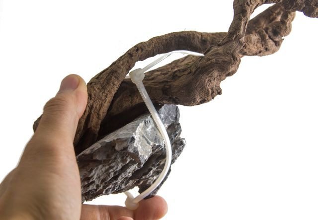 Moorwurzel mit Kabelbinder fixiert