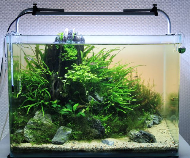 Aquascape with sand