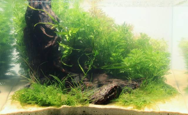 Pflanzen Layout 2