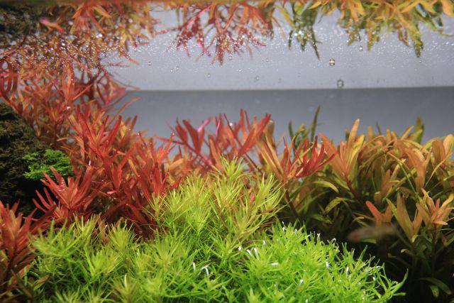 demanding stem plants