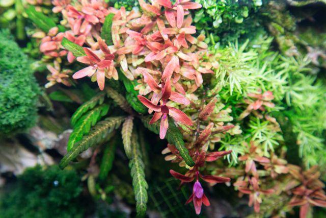 Deficiency symptoms in aquatic plants - Aquascaping Wiki   Aquasabi