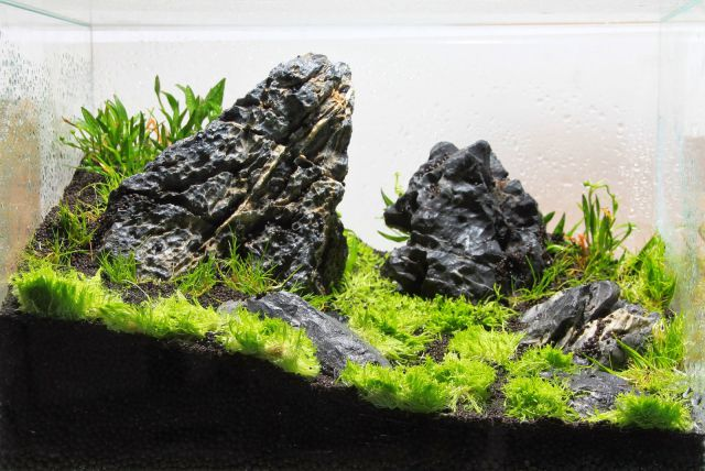 Der Dry Start - Aquascaping Wiki