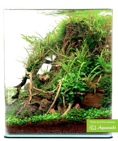 Preparing plants for your shrimp tank - Aquascaping Wiki