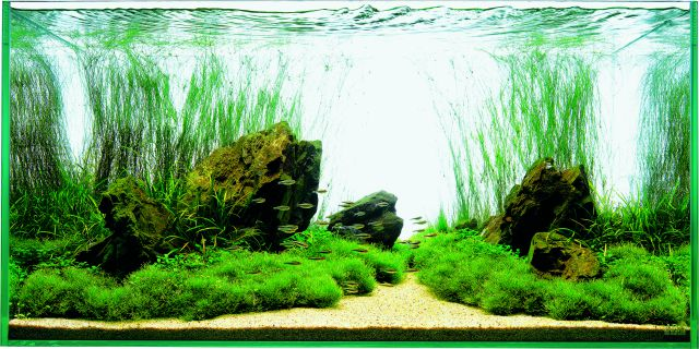 Aquascape Ideas Aquascaping Ada