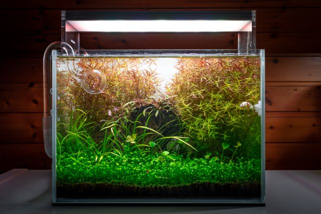 Aquascape by AquaOwner