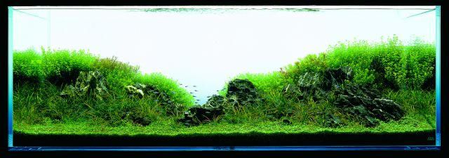 ADA - Nature Aquarium Suikei Gallery 3 tank 3