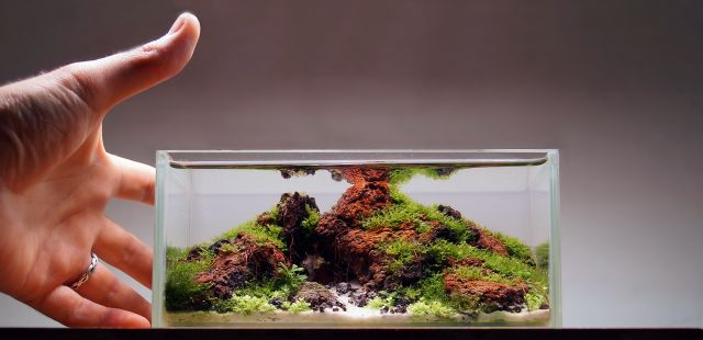 Pico-Aquascape von Andy Ruppert