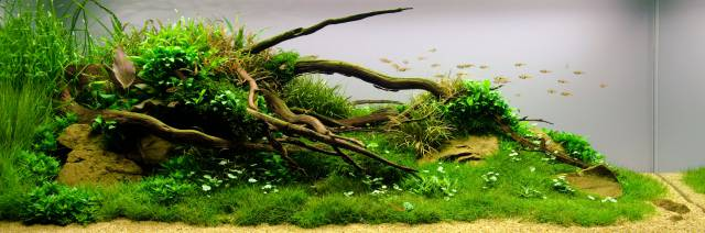 Aquascape Dreieck