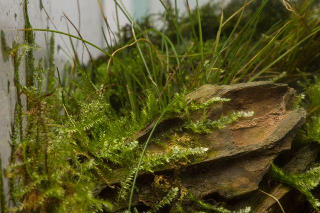 Moss during dry start
