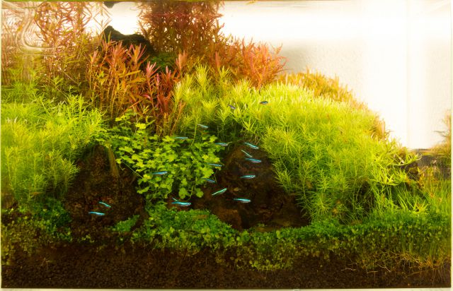 ein aquarium fotografieren teil 2 aquascaping wiki. Black Bedroom Furniture Sets. Home Design Ideas