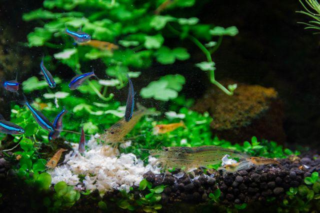 Fische und Garnelen füttern