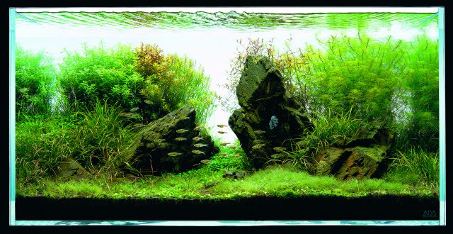 ADA - Nature Aquarium Suikei Gallery 3 tank 2
