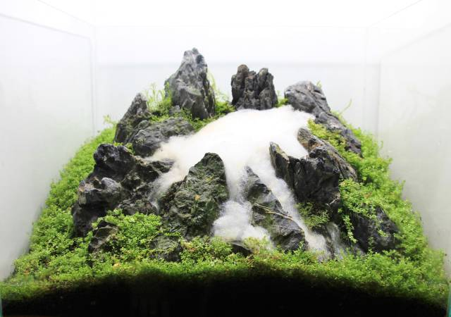 Creating A Three Dimensional Layout With A Pronounced Sense Of Depth Aquascaping Wiki Aquasabi