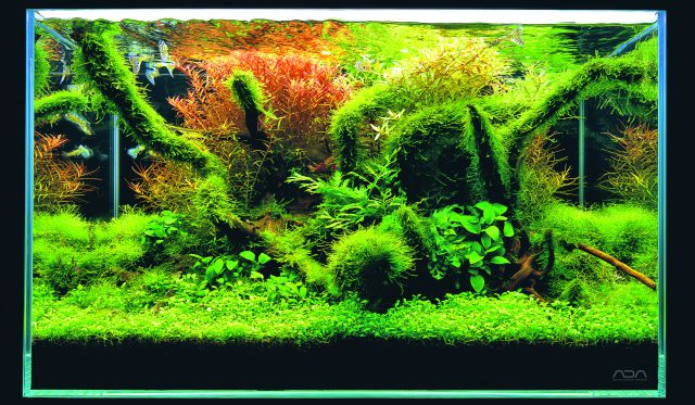 ADA - Nature Aquarium Suikei Gallery 2 tank 4