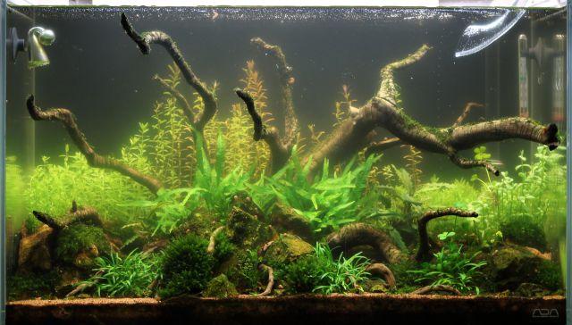 Außergewöhnlich Grüne Schwebealgen - Aquascaping Wiki | Aquasabi @HR_68