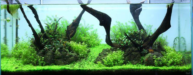 algenfreies Aquarium