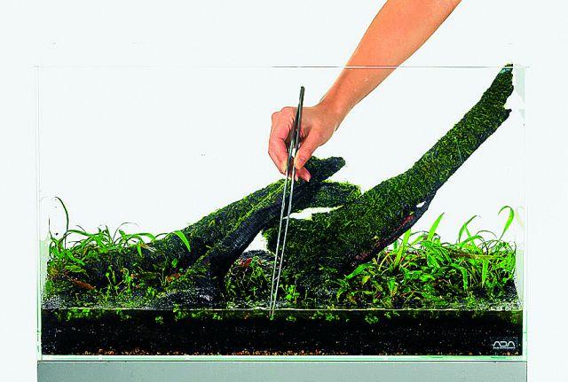 ADA Substrat wässern pflanzen