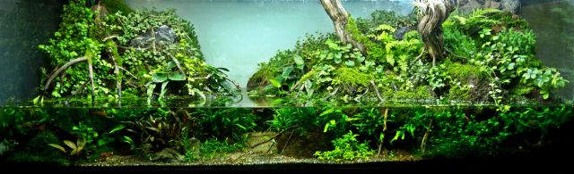 Paludarium 375 Liter von Glaskastenkunst