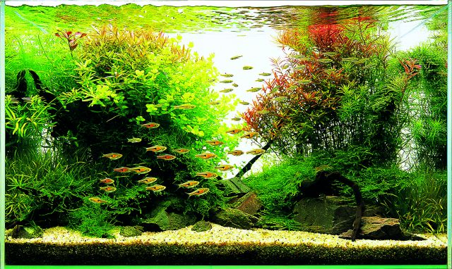 Let's start with A: W60 - Aquascaping Wiki | Aquasabi