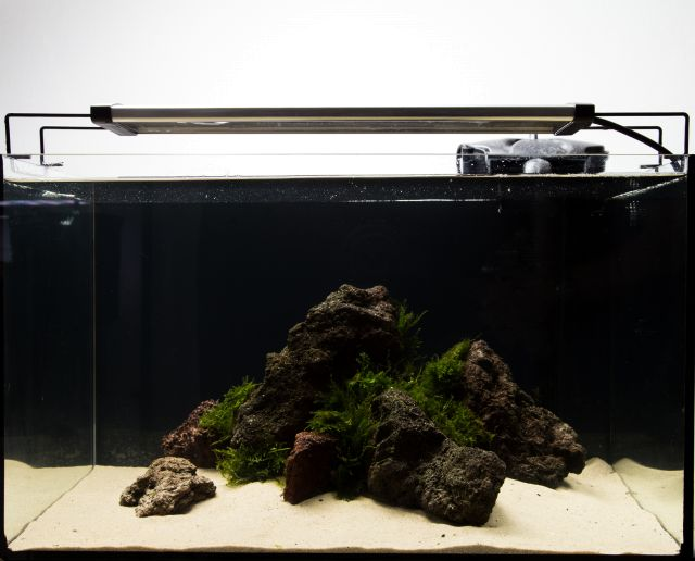 Low Budget Aquascape