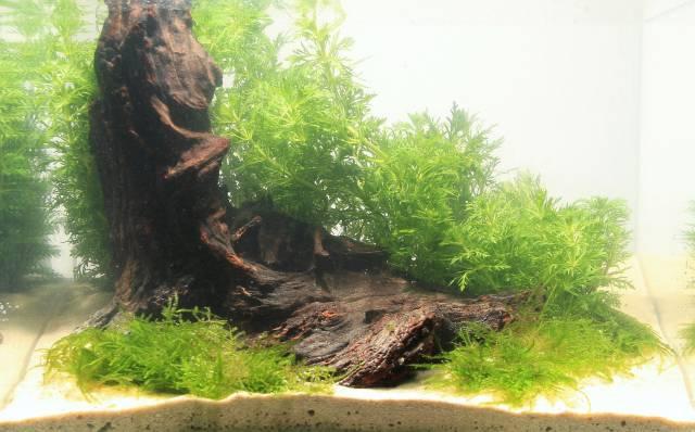 Pflanzen Layout