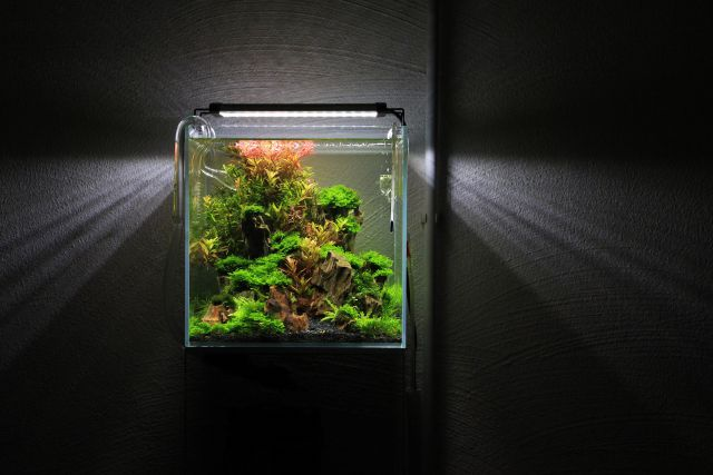 nano aquarium aquascaping wiki aquasabi. Black Bedroom Furniture Sets. Home Design Ideas