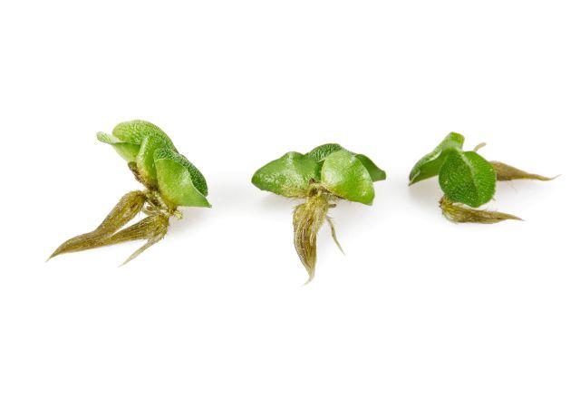 Schwimmpflanze portioniert