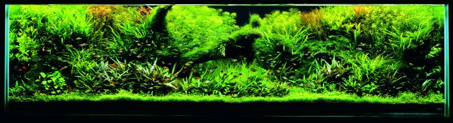 ADA - Nature Aquarium Suikei Gallery 1 tank 3