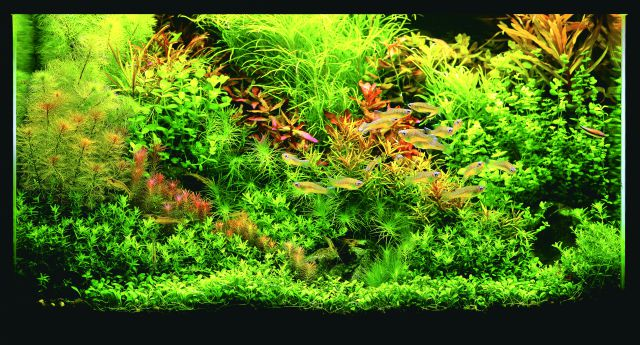ADA - Nature Aquarium Suikei Gallery 1 tank 4