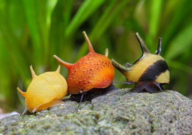 A plague of snails - Aquascaping Wiki | Aquasabi