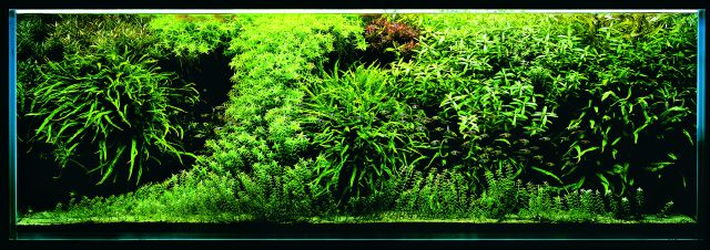 ADA - Nature Aquarium Suikei Gallery 1 tank 1