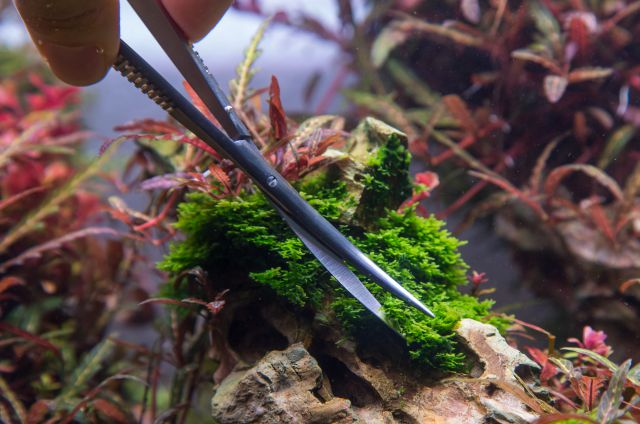 trimming mosses