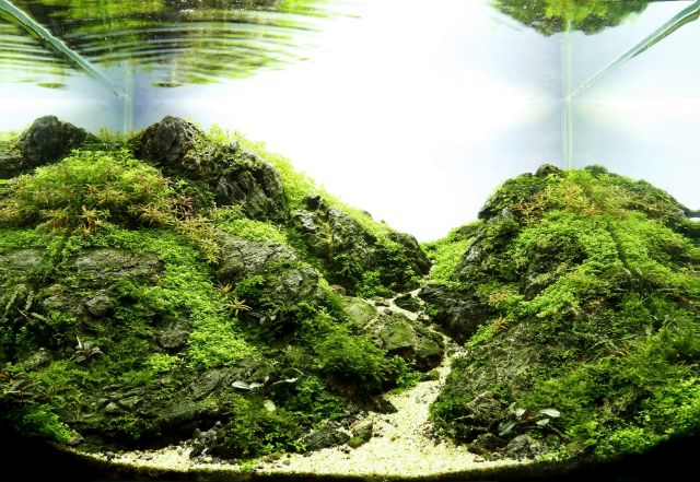 Aquascape von Andy Ruppert