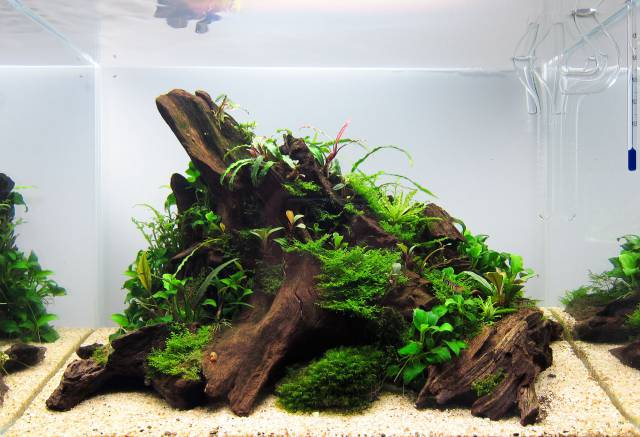Aquascape Design Layout