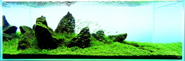 Let´s start with Q: Sansui Iwagumi by Amano - Aquascaping ...