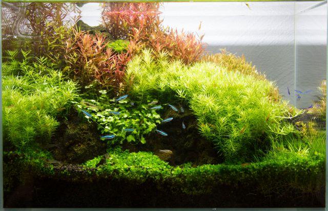 Aquarium mit der normaler Beleuchtung fotografiert.