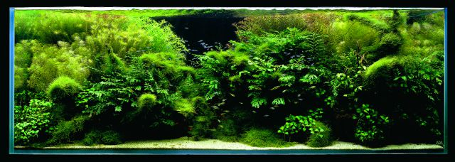 ADA - Nature Aquarium Suikei Gallery 2 tank 2