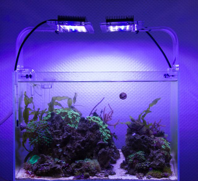 Reef Aquascape