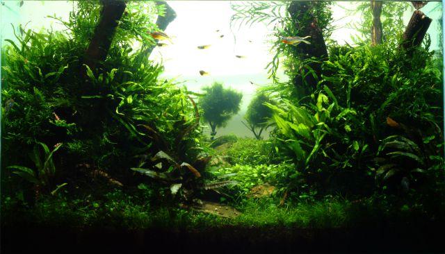 Iwagumi mit Stängelpflanzen