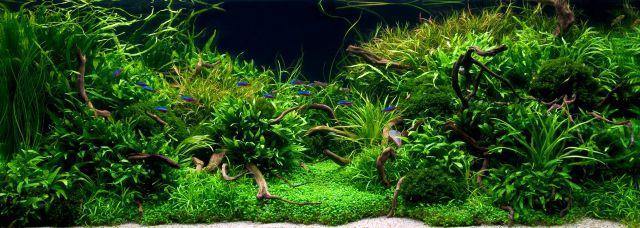 Aquascape with tetras