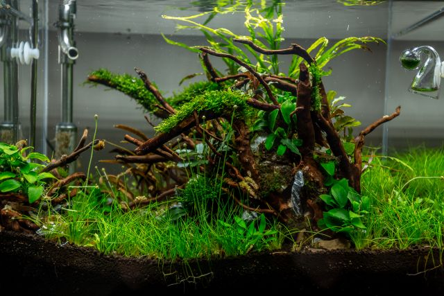 Aquarien Layout vom AquaOwner