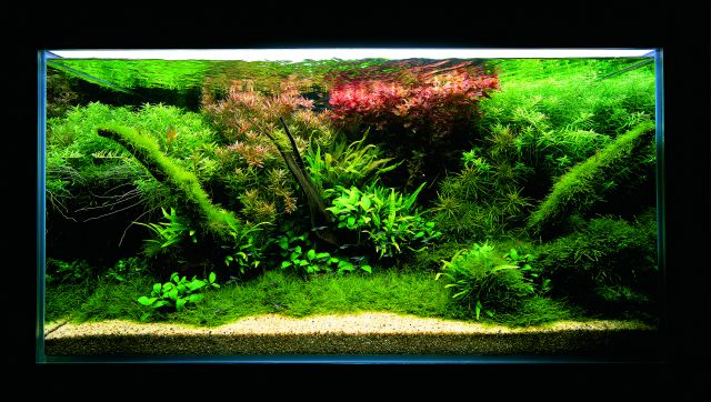 ADA - Nature Aquarium Suikei Gallery 1 tank 2